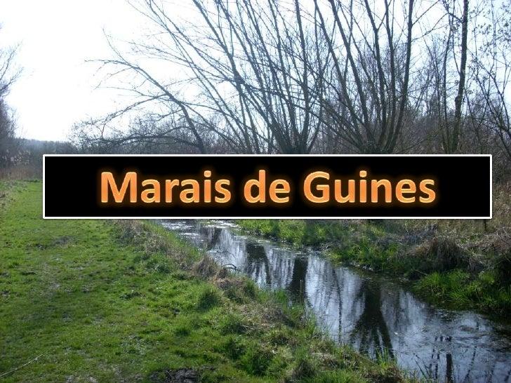 marais De Guines