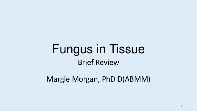 Fungus in Tissue Brief Review Margie Morgan, PhD D(ABMM) 1