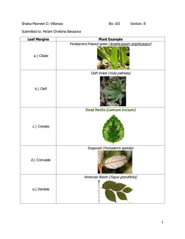 1 Shaina Mavreen D. Villaroza Bio 103 Section: B Submitted to: Ma'am Christina Barazona Leaf Margins Plant Example a.) Cil...
