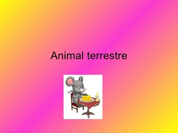 Animal terrestre