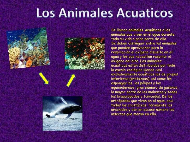Los Animales Acuaticos<br />Se llaman animales acuáticos a los animales que viven en el agua durante toda su vida o gran p...