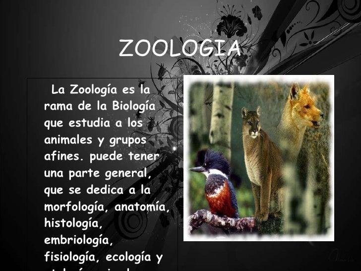 Zoologia basica