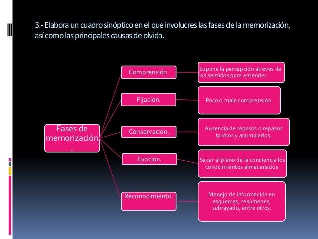 3.-Elabora un cuadro sinóptico en el que involucres las fases de la memorización,  así como las principales causas de olvi...