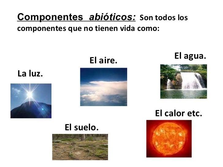 Maria victoria labastida moreno los ecosistemas 8vo a 1 1 for Que elementos conforman el suelo