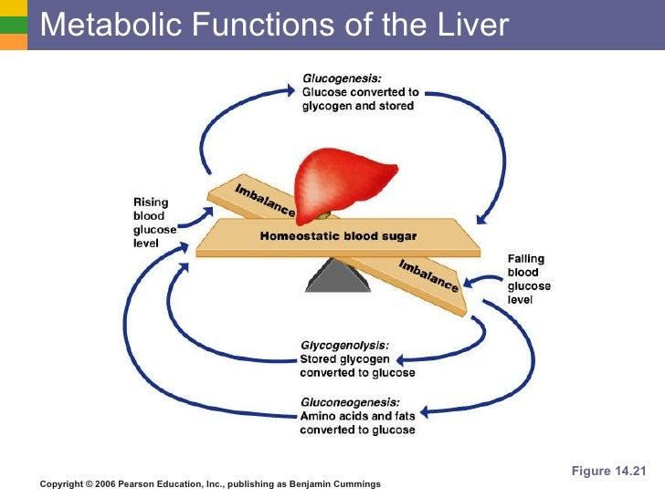 The Digestive System Pt 4