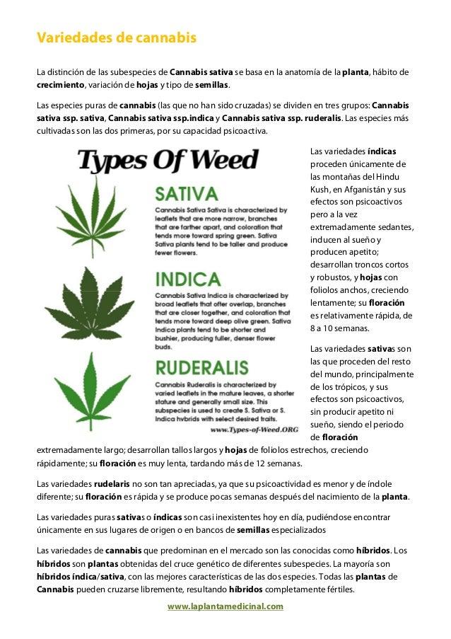 Marihuana Medicinal La Planta Medicinal