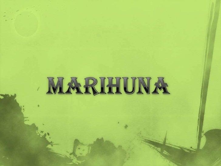  Se extrae de la planta llamada Cannabis Sativa, que contiene más  de cuatrocientos químicos, entre los cuales se encuent...