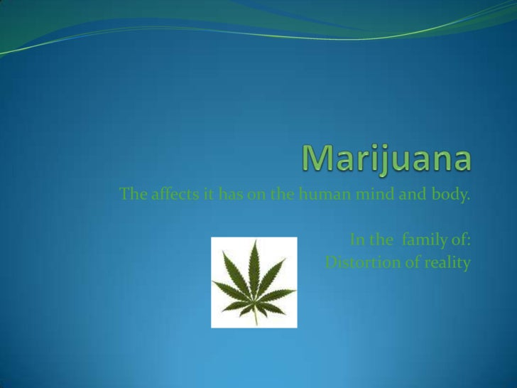 Marijuana<br />The affects it has on the human mind and body.<br />In the  family of:<br />Distortion of reality<br />