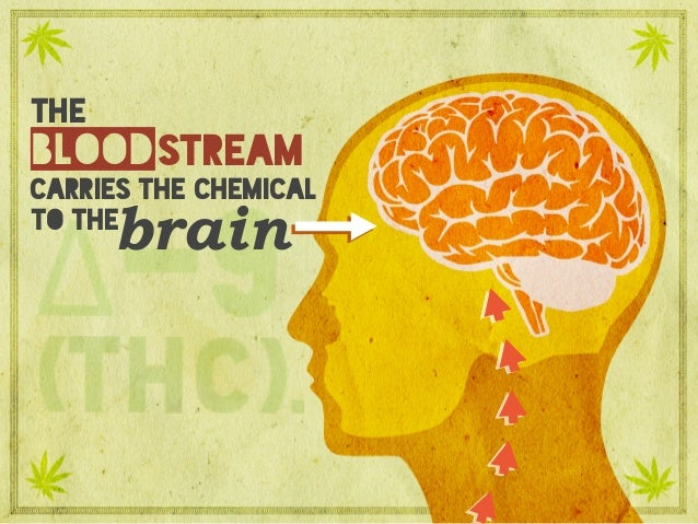 the carries the chemical brain blood to the stream