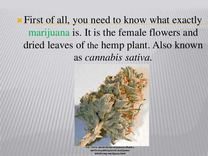 Marijuana facts presentation