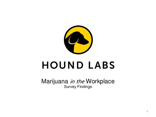 1 Marijuana in the Workplace Survey Findings