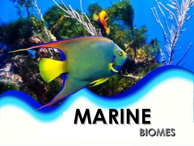 Pictures Of The Marine Biome 106