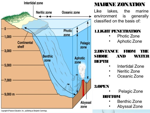 open area zonation of marine life