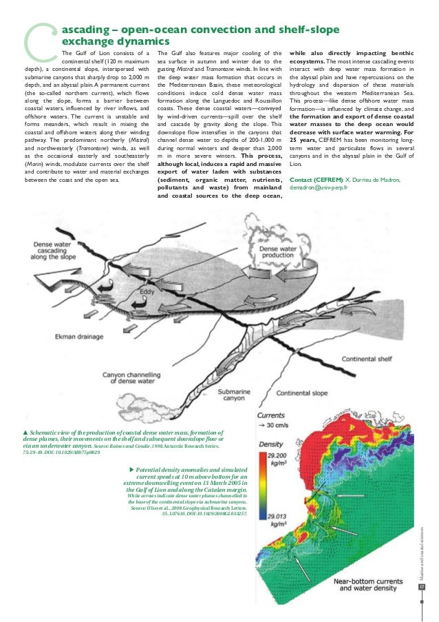 17 pp Schematic view of the production of coastal dense water mass,formation of dense plumes,their movements on the shelf ...