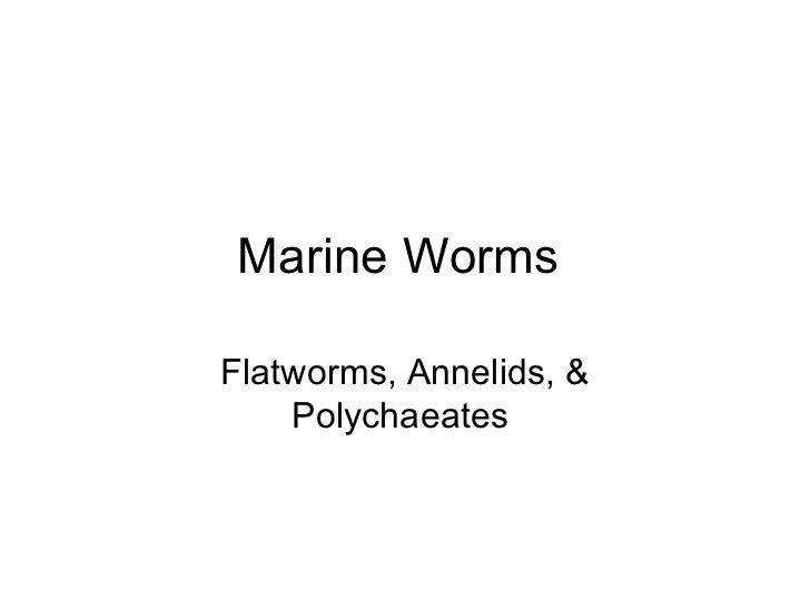 Marine Worms  Flatworms, Annelids, & Polychaeates