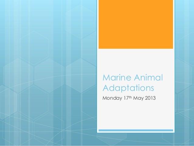 Marine Animal Adaptations Monday 17th May 2013