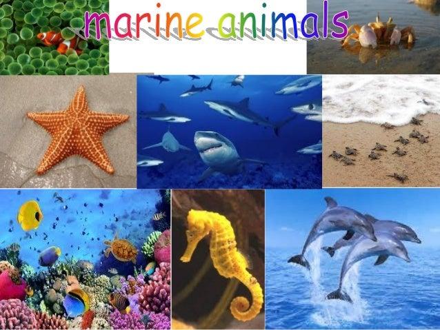 CONTENS The sea horse 3 ~ 4 Dolphin 5 ~ 6 Coral 7 ~ 8 Starfish 9 ~ 10 Marine turtle 11 ~ 12 Shark 13 ~ 14 Crab 15 ~ 16 Clo...