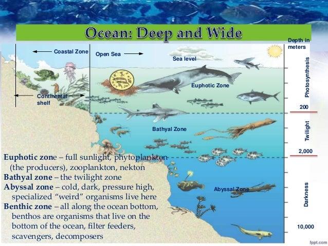 Nekton Fish Marine Ecosystem
