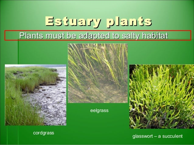Estuaries Biome - ThingLink