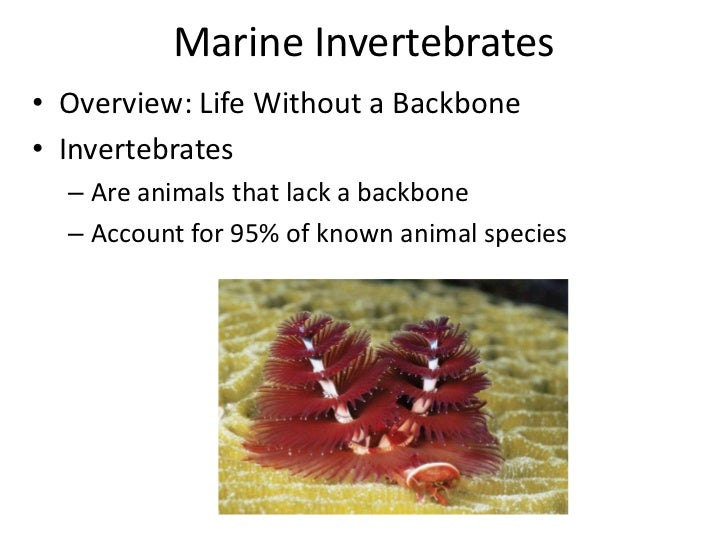 Marine Invertebrates• Overview: Life Without a Backbone• Invertebrates  – Are animals that lack a backbone  – Account for ...