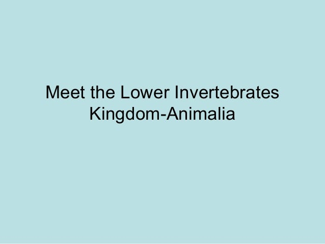 Meet the Lower Invertebrates     Kingdom-Animalia