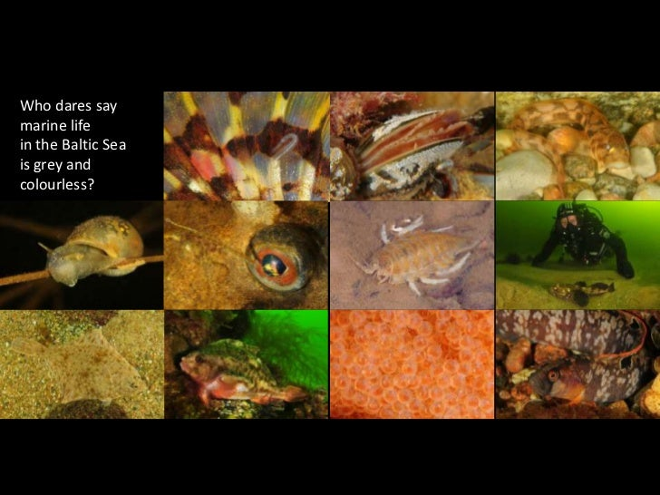 Who dares say <br />marine life <br />in the Baltic Sea<br />is grey and colourless?<br />
