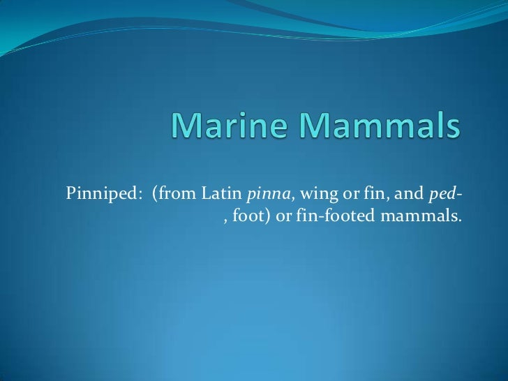 Marine Mammals<br />Pinniped:  (from Latin pinna, wing or fin, and ped-, foot) or fin-footed mammals. <br />