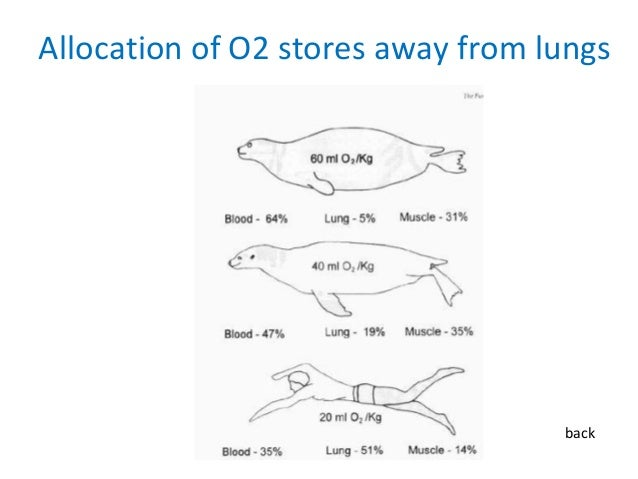 Ppt physiological adaptations to freediving in marine mammals allocation of o2 stores away from lungs back ccuart Gallery