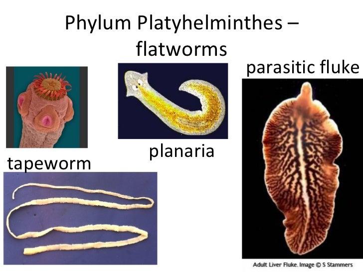 Marine Worms Powerpoint