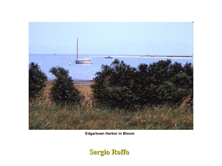 Sergio Roffo  Edgartown Harbor in Bloom