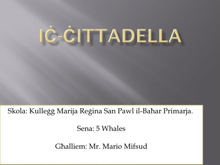 Skola: Kulleġġ Marija Reġina San Pawl il-Baħar Primarja.  Sena: 5 Whales Għalliem: Mr. Mario Mifsud