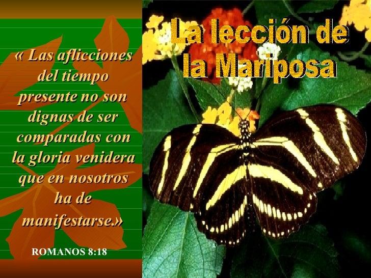 Mariposa Slide 2