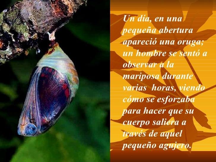 Mariposa Slide 3