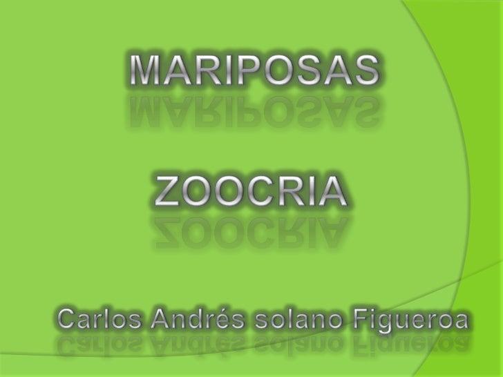 Clasificación científicaReino:         AnimaliaFilo:          ArthropodaClase:         InsectaInfraclase:    Neoptera     ...