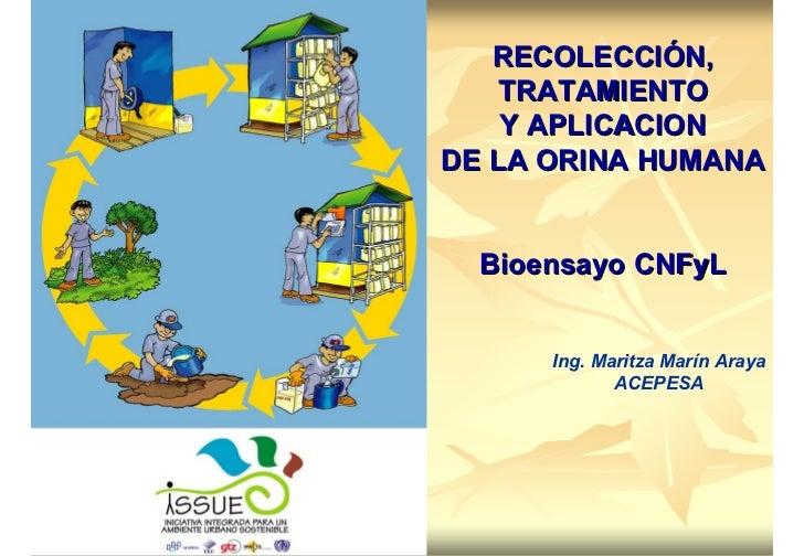 RECOLECCIÓN,   TRATAMIENTO    Y APLICACIONDE LA ORINA HUMANA  Bioensayo CNFyL      Ing. Maritza Marín Araya             AC...