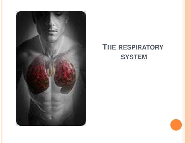 The respiratory system<br />