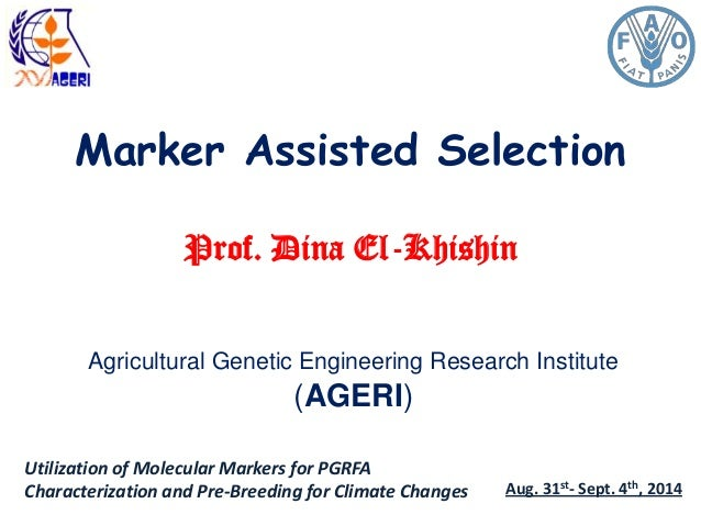 Marker Assisted Selection Prof. Dina El-Khishin Agricultural Genetic Engineering Research Institute (AGERI) Utilization of...