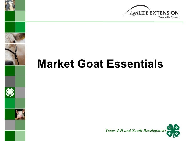 Market Goat Essentials Texas 4-H and Youth Development