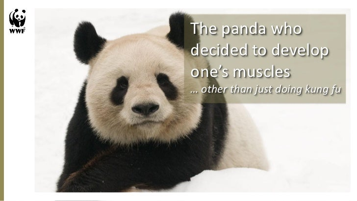 The panda whodecided to developone's muscles… other than just doing kung fu