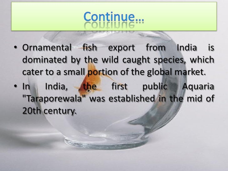 ornamental fishing in india Several types of net fishing have also ornamental fishes have been j sci res, 7 (6): in india the marine ornamental fishes are in most of.