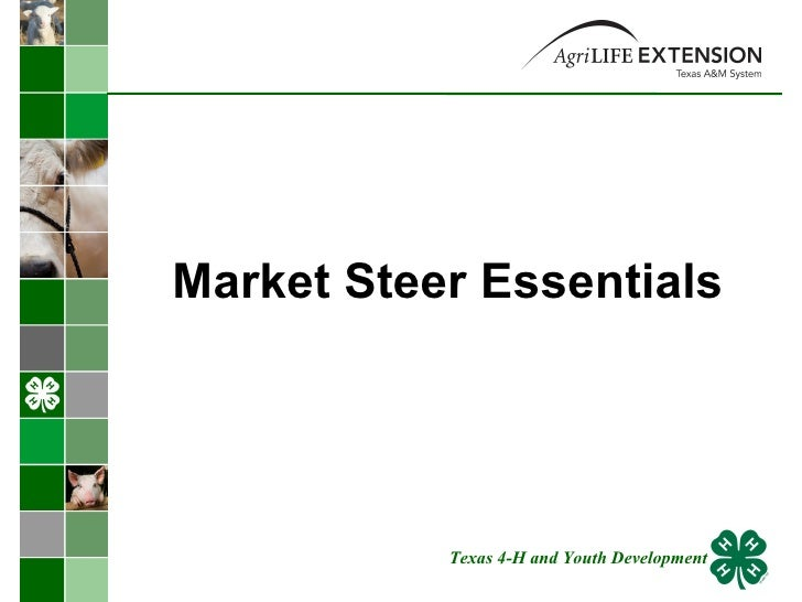 Market Steer Essentials  Texas 4-H and Youth Development