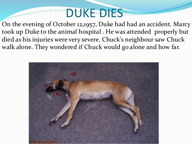 """a dog named duke essay 'do you know your name my name is duke my name is duke'"""" a talking dog, i  thought, and knew i was in for a special story i didn't realize."""