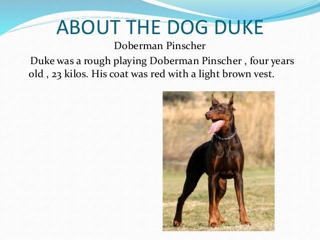 A Dog Named Duke Author
