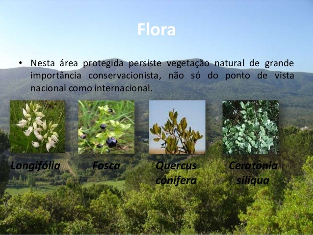 Flora• Nesta área protegida persiste vegetação natural de grandeimportância conservacionista, não só do ponto de vistanaci...