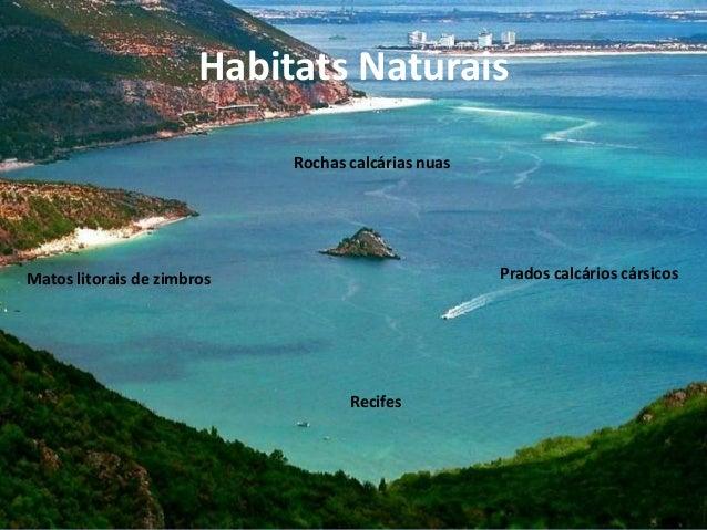 Habitats NaturaisMatos litorais de zimbros Prados calcários cársicosRecifesRochas calcárias nuas