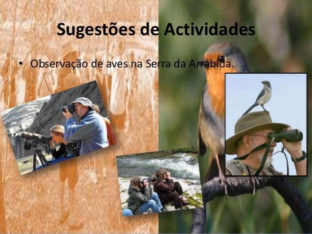 Sugestões de Actividades• Observação de aves na Serra da Arrábida.