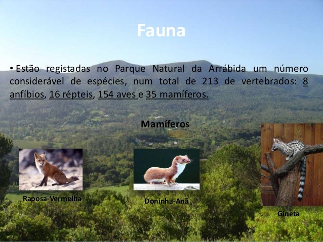 Fauna• Estão registadas no Parque Natural da Arrábida um númeroconsiderável de espécies, num total de 213 de vertebrados: ...