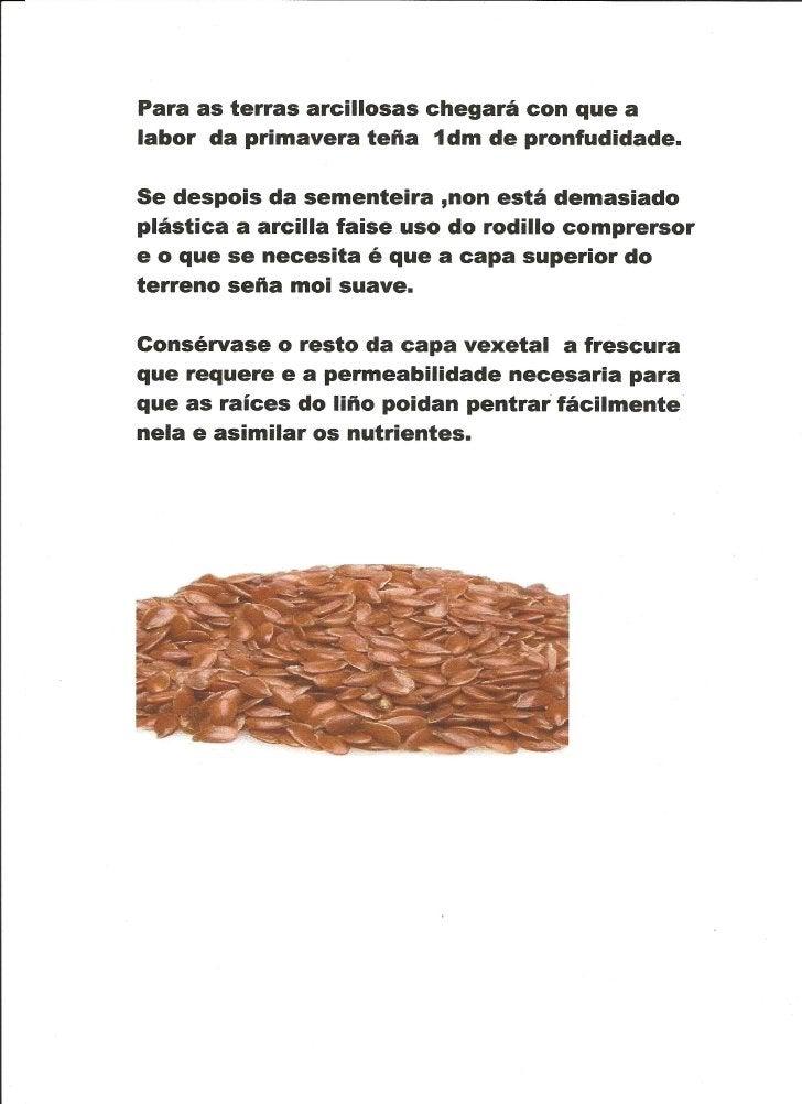 Traballo sobre O liño, Marlén 6º  curso