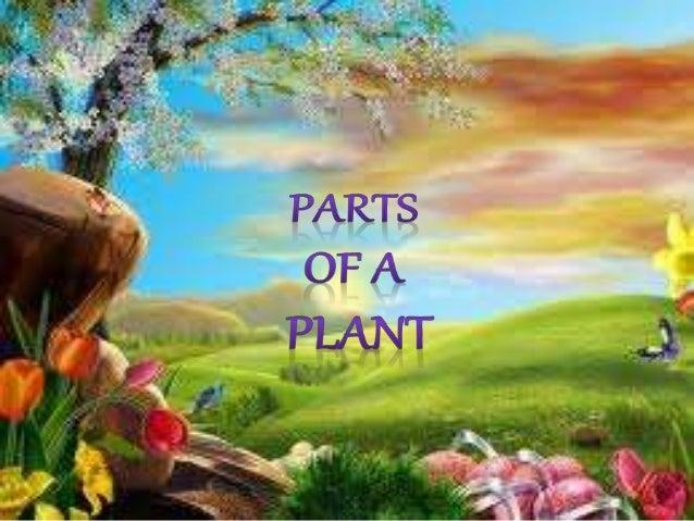 PLANT PARTS Leaves Flower Stem Roots