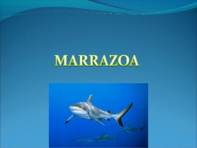 DEFINIZIOA Marrazoak (selachimorph) , kartilagozko hezurdura du , marrazoa arrainen atalan sailkatzen da , gehienek diote...